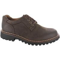 Schuhe Herren Derby-Schuhe Josef Seibel Schnuerschuhe Chance 19 Weite G 2194481/330 braun
