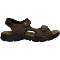 Schuhe Herren Sandalen / Sandaletten Panama Jack SALTON C17 Verde