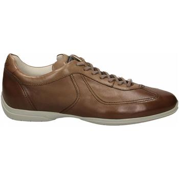 Schuhe Herren Derby-Schuhe Santoni PEDULA 7F+INF. GOOSE PLUS e50-marrone-medio