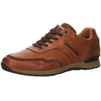 Schuhe Herren Derby-Schuhe & Richelieu Salamander Schnuerschuhe AVATO 31-56208-07 (G) braun