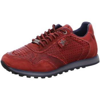 Schuhe Herren Sneaker Low Cetti C848 NUTUR TIN Other