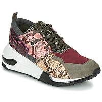 Schuhe Damen Sneaker Low Steve Madden CLIFF Multicolor