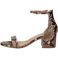 Schuhe Damen Sandalen / Sandaletten Steve Madden IRENEE PYTHON.
