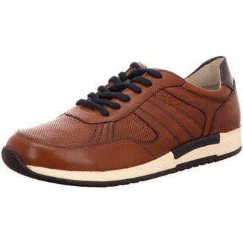 Schuhe Herren Derby-Schuhe & Richelieu Sioux Schnuerschuhe NV 37642 braun