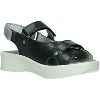 Schuhe Damen Sandalen / Sandaletten Wolky Sandaletten Globe 05350 schwarz