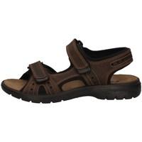 Schuhe Herren Sandalen / Sandaletten Imac 503370 BRAUN