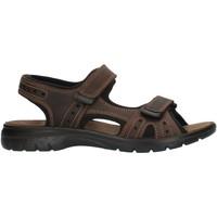 Schuhe Herren Sportliche Sandalen Imac 503370 Braun