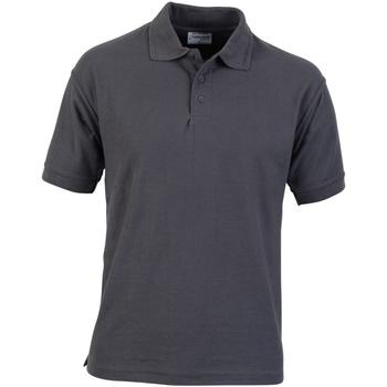 Kleidung Herren Polohemden Absolute Apparel  Kolonne Grau