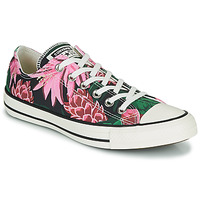 Schuhe Damen Sneaker Low Converse CHUCK TAYLOR ALL STAR JUNGLE SCENE OX Rose / Grün