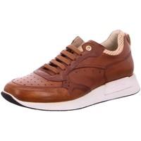 Schuhe Herren Derby-Schuhe & Richelieu Corvari Schnuerschuhe 9692-600 braun