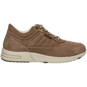 Schuhe Herren Sneaker High Valleverde 17847PE21 niedrig Harren TAUPE TAUPE
