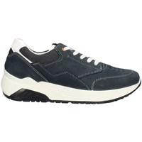 Schuhe Herren Sneaker Low IgI&CO 7125222PE21 niedrig Harren HELLBLAU HELLBLAU