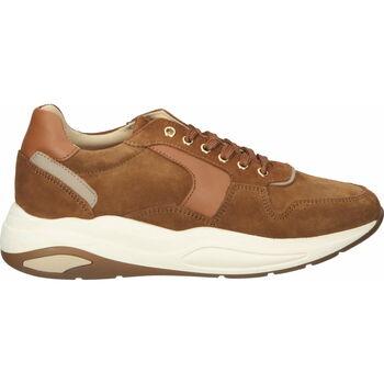 Schuhe Damen Sneaker Low Scapa Sneaker Camel