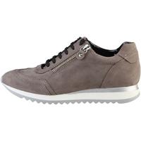 Schuhe Damen Sneaker Low Arnaldo Toscani  Taupe