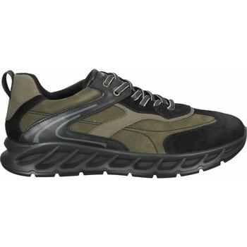 Schuhe Herren Sneaker Low IgI&CO Sneaker Braun/Schwarz