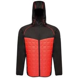 Kleidung Herren Jacken Regatta Modular Thermal Schwarz, Rot