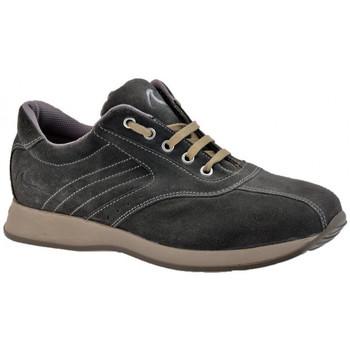 Schuhe Herren Sneaker High Docksteps Low Lässige Globe sneakers