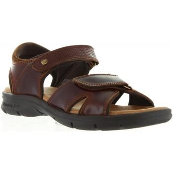 Schuhe Herren Sandalen / Sandaletten Panama Jack SANDERS CLAY C1 Marrón