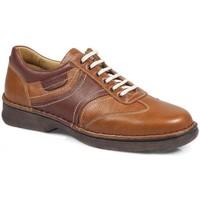 Schuhe Damen Halbschuhe Calzamedi Schuhe  Shark M 2151 MARRON